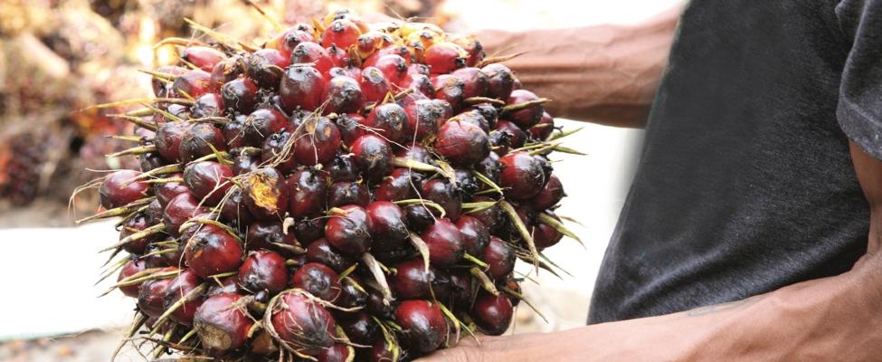 RSPO kestävä palmuöljy alkuperäseurannan sertifiointi