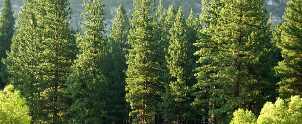 PEFC-puun alkuperäketjun seurannan sertifiointi