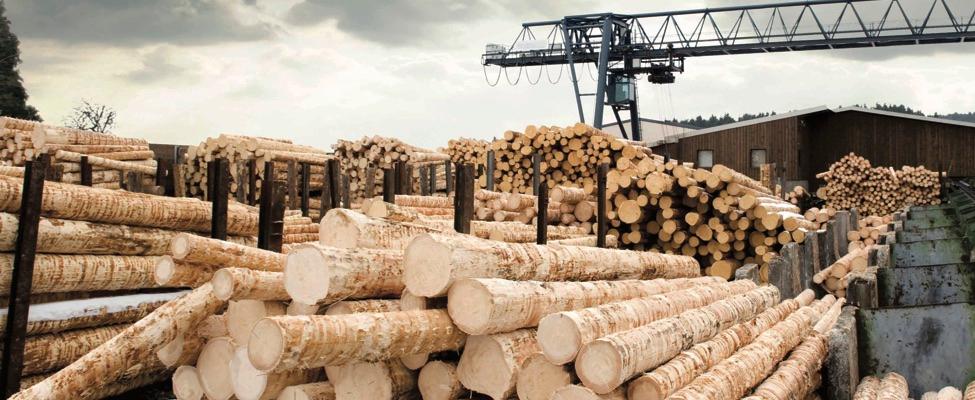 EUTR Euroopan unionin puutavara-asetus